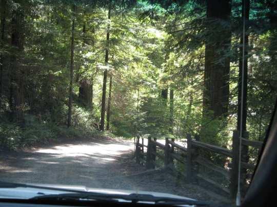 The Chandelier Drive-Thru Tree | Redwood Forest