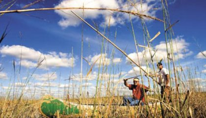 rice388-jpg__420x240_q85_crop_upscale