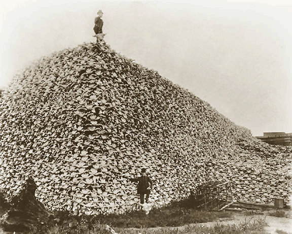 Bison_skull_pile,_ca1870-772015