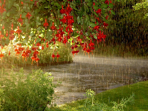 Rain-flowing-flowers