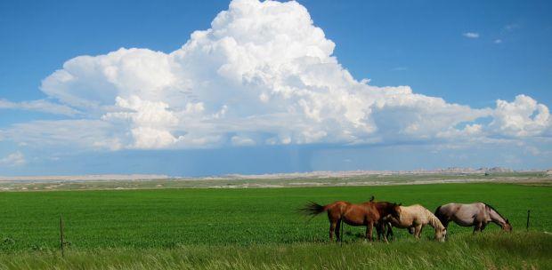 sioux-horses