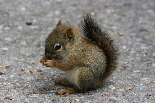 baby-squireel-eating