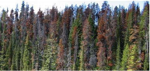 15 Dead Forest Continental Divide